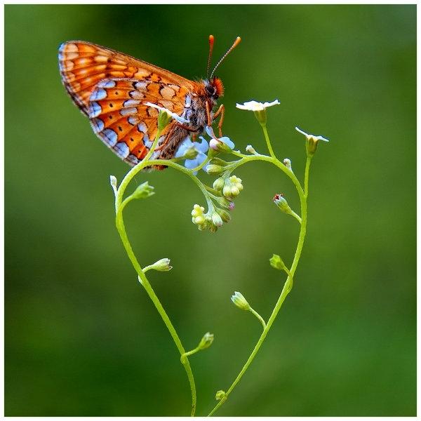 Inima transformarii: cat de curajoasa este iubirea ta? (II)