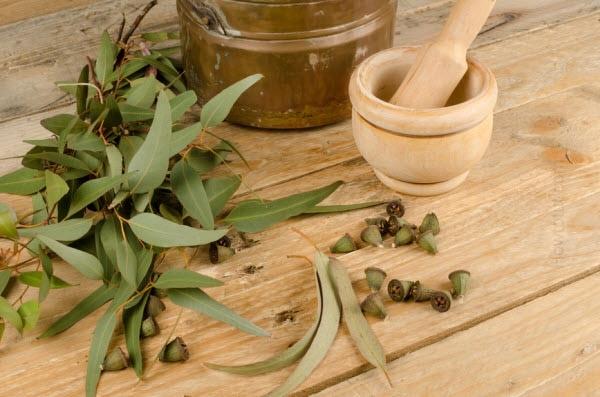 Proprietatile uleiurilor esentiale de la A la Z. Uleiul esential de eucalipt